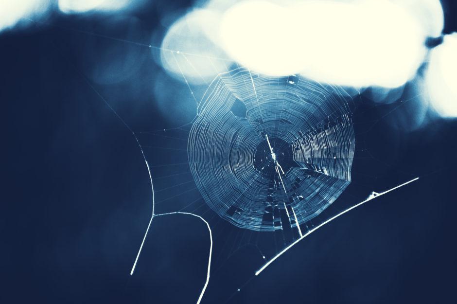 Photo of Spiderweb Shirakawago, Japan