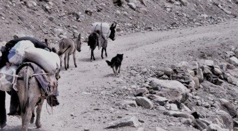 Nomadic shephards near Bibi Fatima springs, Tajikistan