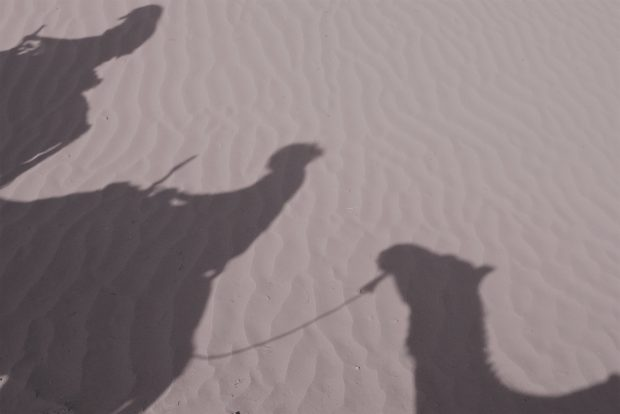 Photo of camel train shadow in Sahara, Morocco