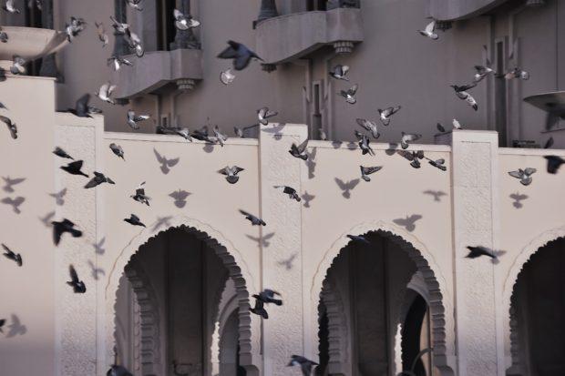 Photo of birds taking flight Hassan II Mosque in Casablanca, Morocco