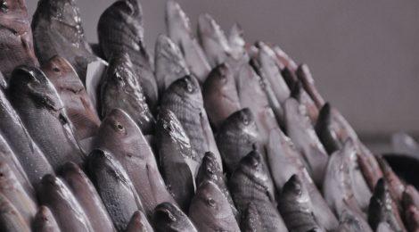 Photo of Fish market, Casablanca Morocco